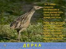 Д Е Р К А Ч Це пташка-скорохід. Він вирушає в свою далеку путь пішки. Бо біга...