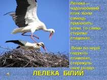 Лелека — чадолюбивий птах. Коли самець приносить корм, то самка стереже пташе...