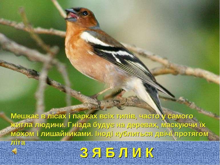 З Я Б Л И К Мешкає в лісах і парках всіх типів, часто у самого житла людини. ...