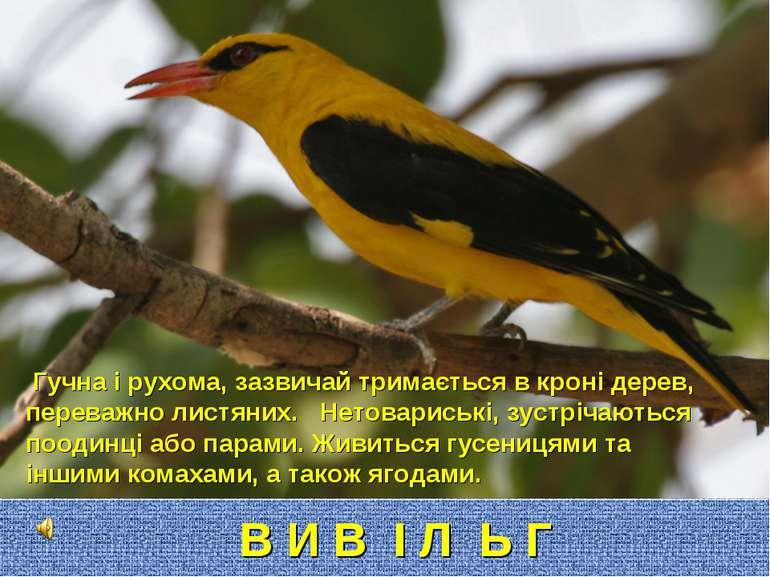 Гучна і рухома, зазвичай тримається в кроні дерев, переважно листяних. Нетова...