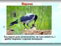 Ворона Їжа ворон дуже різноманітна, це і рослинність, і дрібні тварини, і хар...