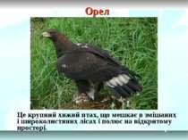 Орел Це крупний хижий птах, що мешкає в змішаних і широколистяних лісах і пол...