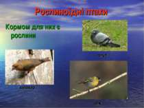 Рослиноїдні птахи Кормом для них є рослини голуб шишкар чиж