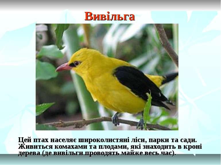 Вивільга Цей птах населяє широколистяні ліси, парки та сади. Живиться комахам...