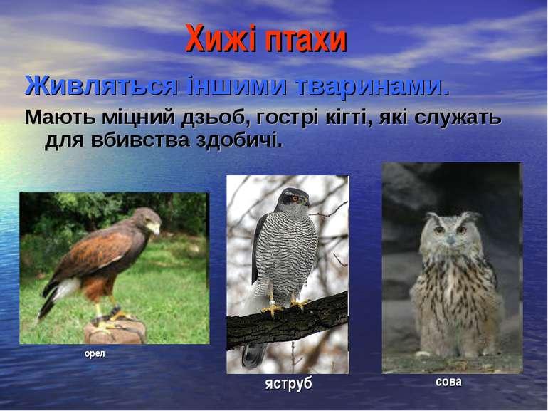 Хижі птахи Живляться іншими тваринами. Мають міцний дзьоб, гострі кігті, які ...