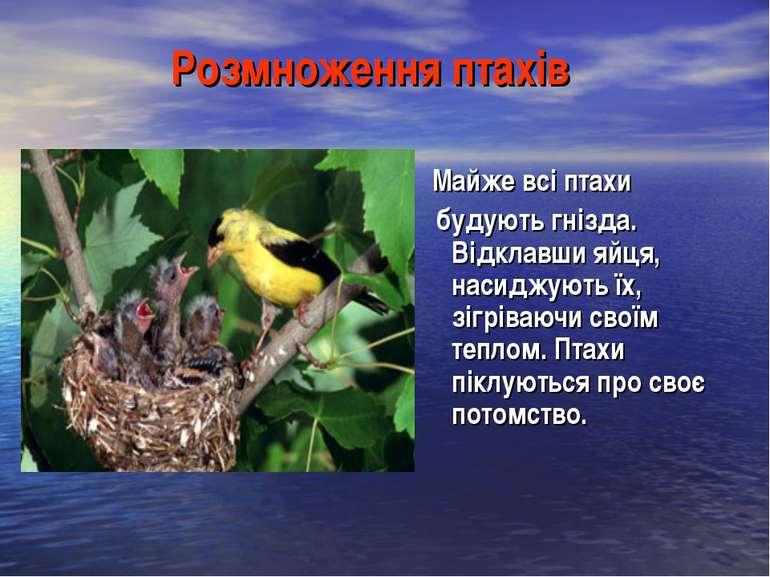 Розмноження птахів Майже всі птахи будують гнізда. Відклавши яйця, насиджують...