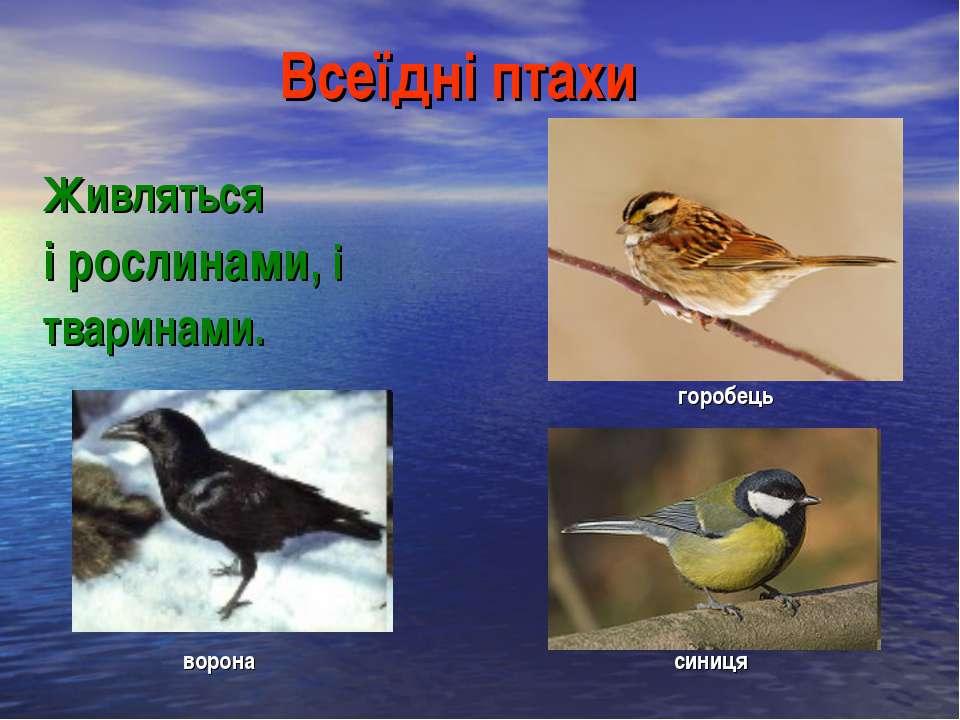 Всеїдні птахи Живляться і рослинами, і тваринами. горобець ворона синиця