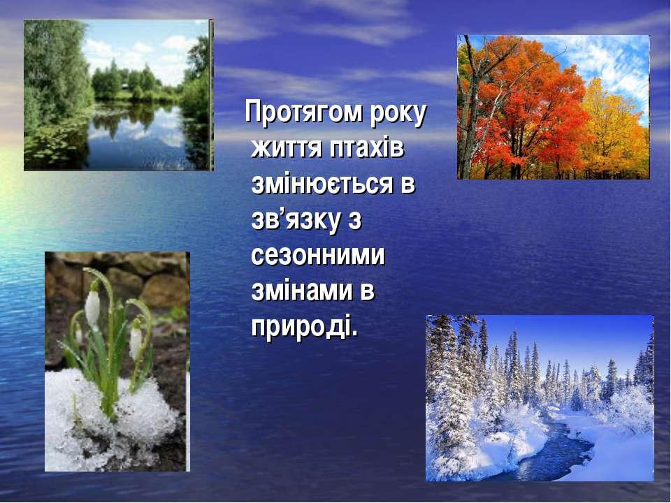 Протягом року життя птахів змінюється в зв'язку з сезонними змінами в природі.