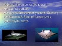 Риби поділяються на два класи: хрящові та кісткові. Хрящові риби поширені у м...