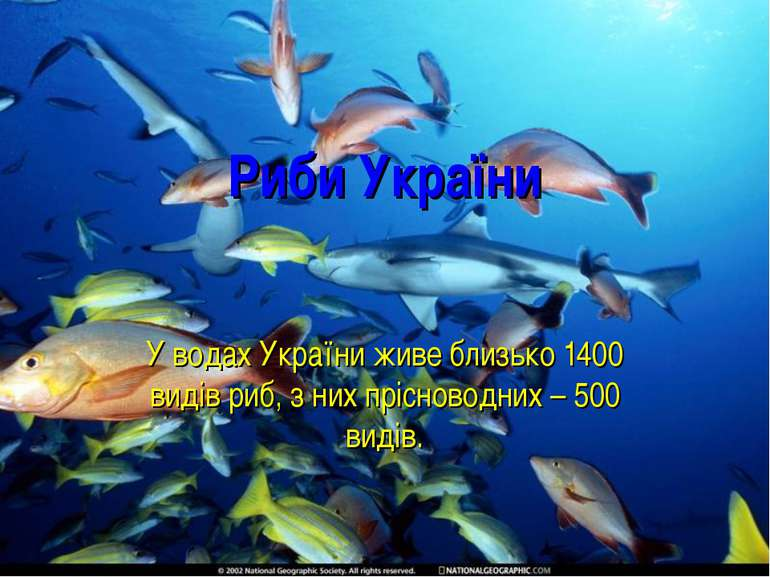 Риби України У водах України живе близько 1400 видів риб, з них прісноводних ...