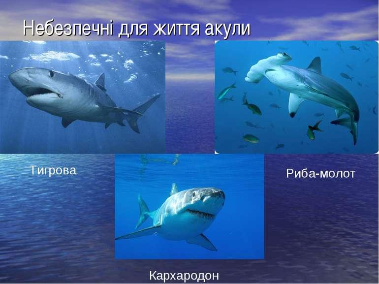 Небезпечні для життя акули Тигрова Риба-молот Кархародон