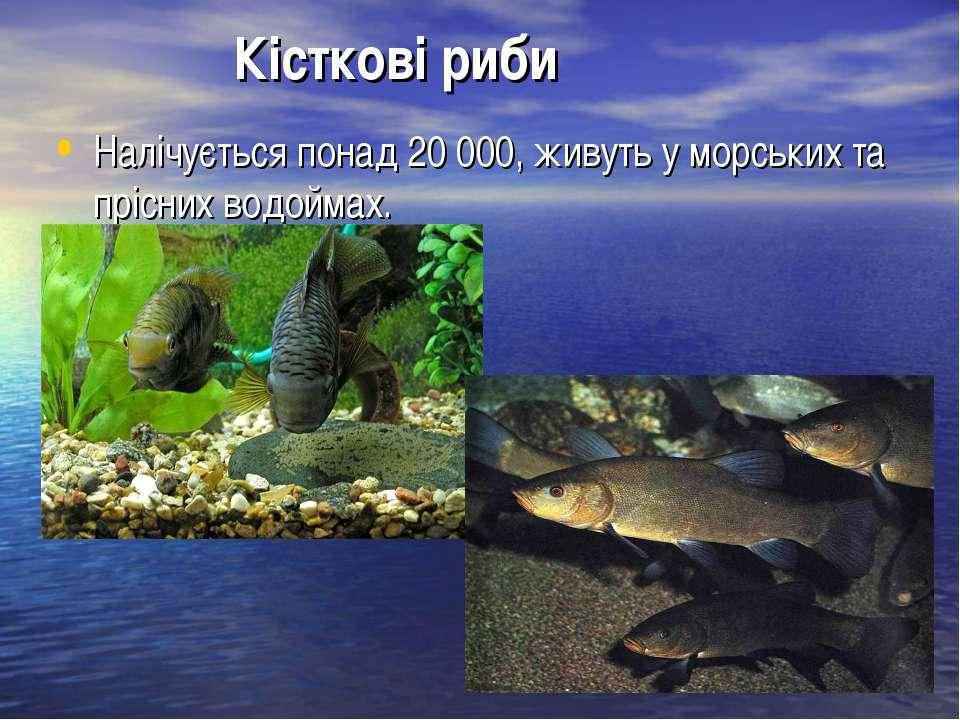 Кісткові риби Налічується понад 20 000, живуть у морських та прісних водоймах.