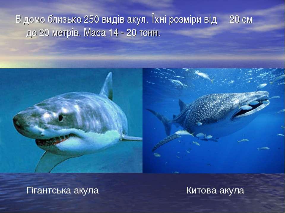 Відомо близько 250 видів акул. Їхні розміри від 20 см до 20 метрів. Маса 14 -...
