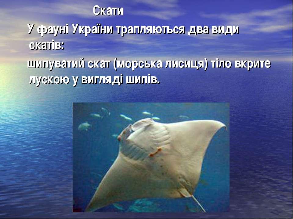 Скати У фауні України трапляються два види скатів: шипуватий скат (морська ли...