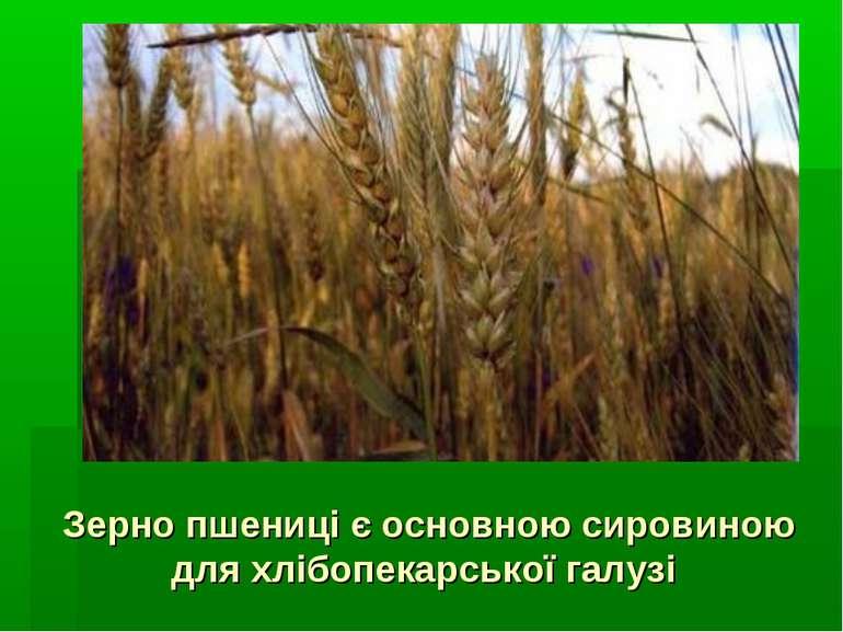 Зерно пшениці є основною сировиною для хлібопекарської галузі
