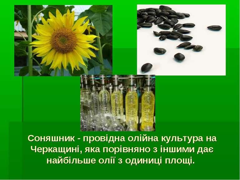 Соняшник - провідна олійна культура на Черкащині, яка порівняно з іншими дає ...