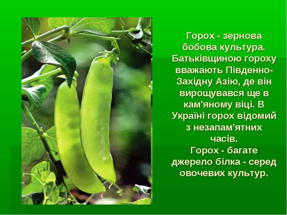 Горох - зернова бобова культура. Батьківщиною гороху вважають Південно-Західн...