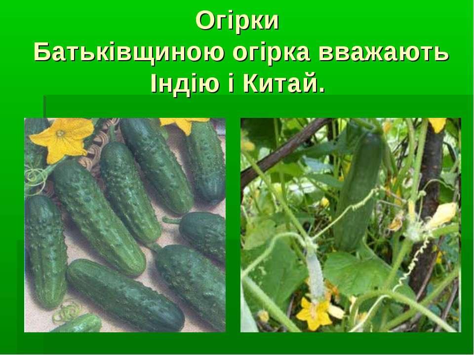 Огірки Батьківщиною огірка вважають Індію і Китай.