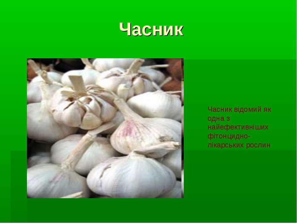 Часник Часник відомий як одна з найефективніших фітонцидно-лікарських рослин