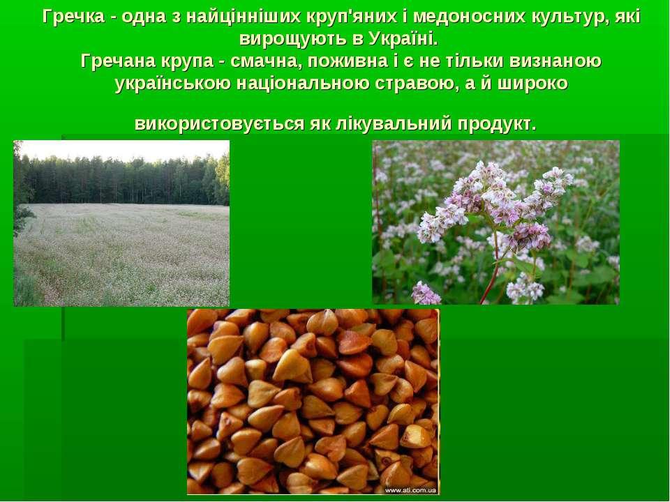 Гречка - одна з найцінніших круп'яних і медоносних культур, які вирощують в У...