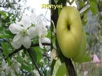 Яблуні