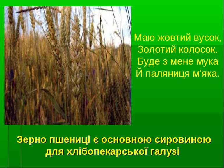 Зерно пшениці є основною сировиною для хлібопекарської галузі Маю жовтий вусо...