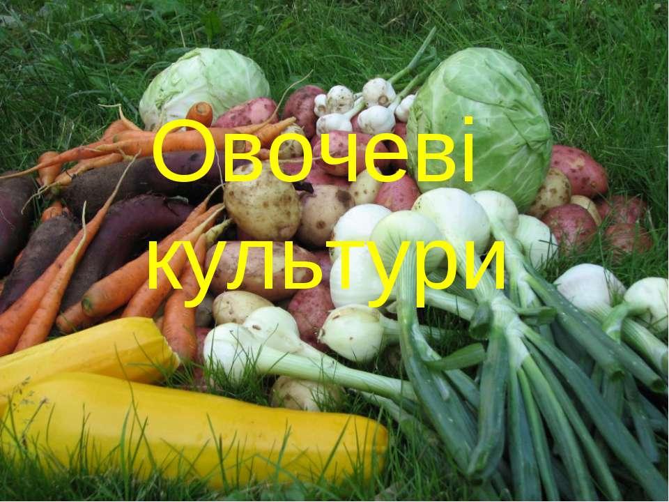 Овочеві культури