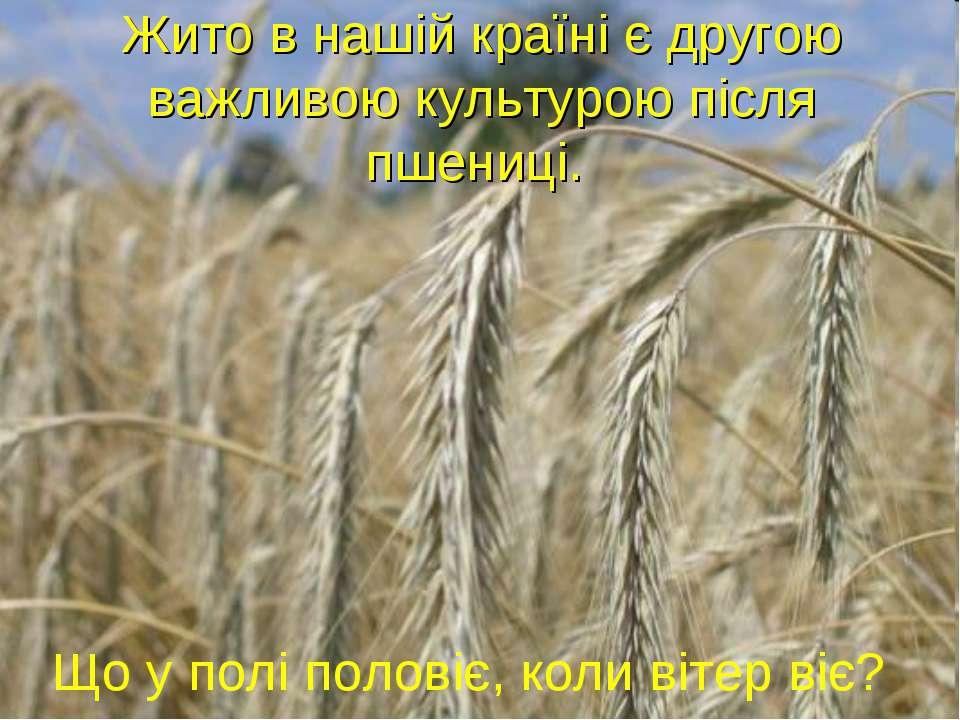 Що у полі половіє, коли вітер віє? Жито в нашій країні є другою важливою куль...