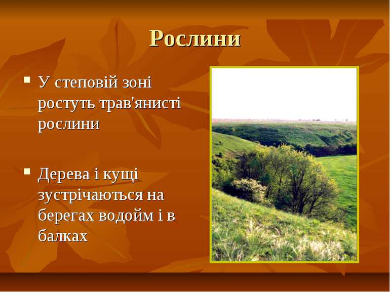 Рослини У степовій зоні ростуть трав'янисті рослини Дерева і кущі зустрічають...
