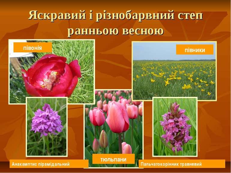 Яскравий і різнобарвний степ ранньою весною тюльпани півонія Пальчатокорінник...