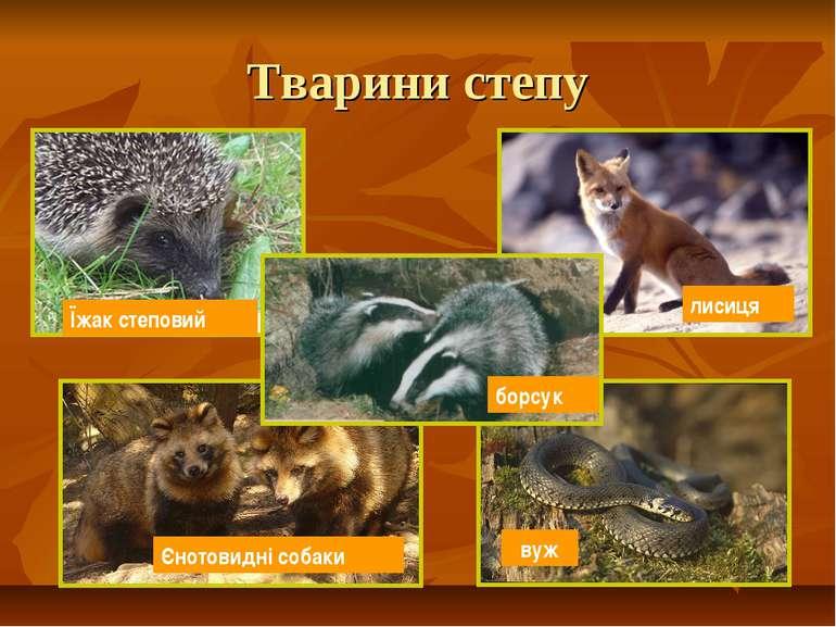 Тварини степу Їжак степовий лисиця Єнотовидні собаки вуж борсук