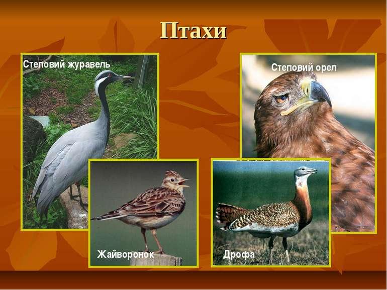 Птахи Степовий журавель Степовий орел Жайворонок Дрофа