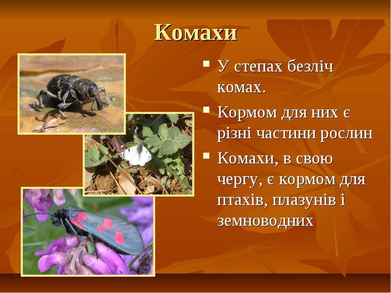 Комахи У степах безліч комах. Кормом для них є різні частини рослин Комахи, в...