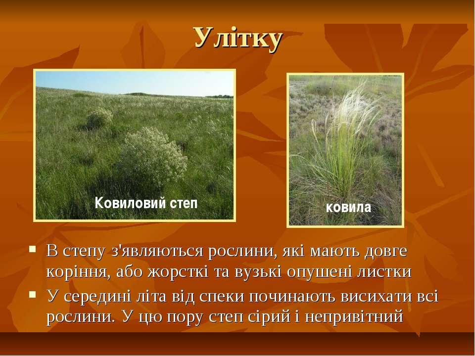 Улітку В степу з'являються рослини, які мають довге коріння, або жорсткі та в...