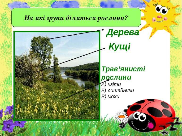 Дерева На які групи діляться рослини?
