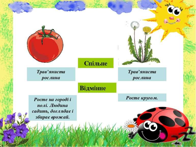 Спільне Відмінне Трав'яниста рослина Трав'яниста рослина Росте на городі і по...
