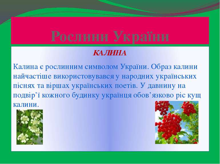 Рослини України КАЛИНА Калина є рослинним символом України. Образ калини найч...