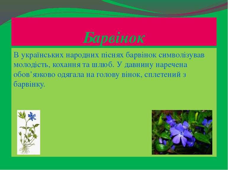 Барвінок В українських народних піснях барвінок символізував молодість, кохан...