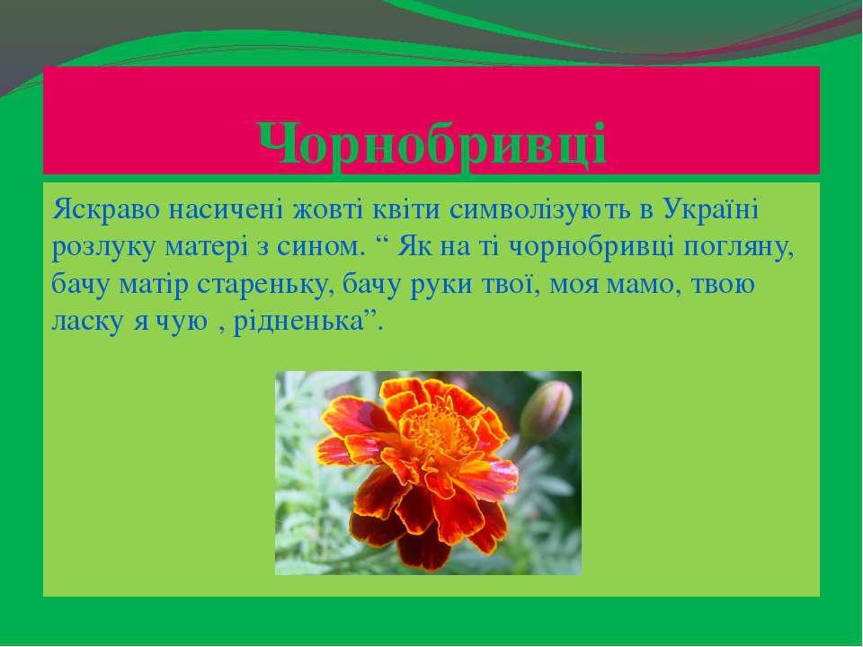 Чорнобривці Яскраво насичені жовті квіти символізують в Україні розлуку матер...