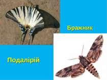 Подалірій Бражник