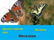 Метелики Денне павине око Махаон