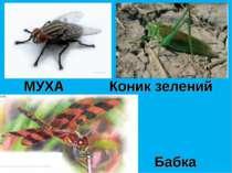 МУХА Бабка Коник зелений