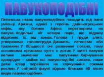 Латинська назва павукоподібних походить від імені умільці Арахни, однієї з ге...