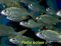 Риби воїни