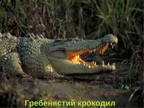 Гребенястий крокодил