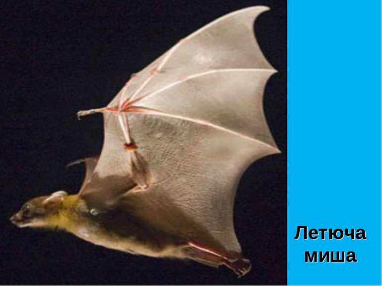 Летюча миша