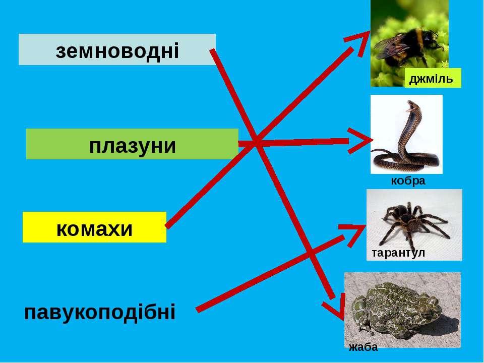 плазуни павукоподібні земноводні комахи джміль кобра тарантул жаба