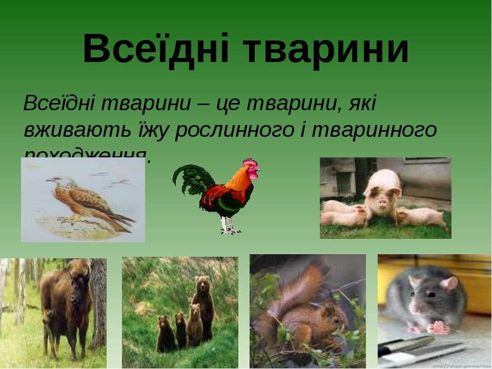 Всеїдні тварини Всеїдні тварини – це тварини, які вживають їжу рослинного і т...