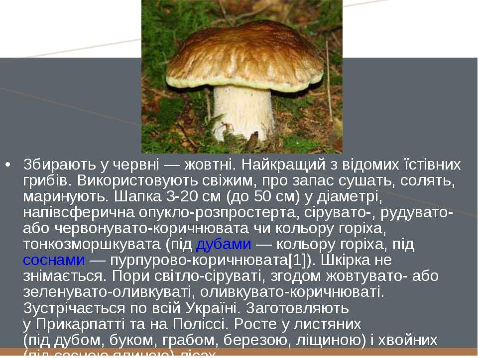 Збирають у червні— жовтні. Найкращий з відомих їстівних грибів. Використовую...