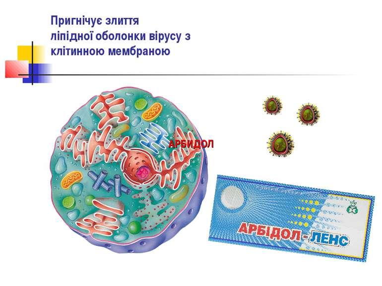 Пригнічує злиття ліпідної оболонки вірусу з клітинною мембраною АРБИДОЛ